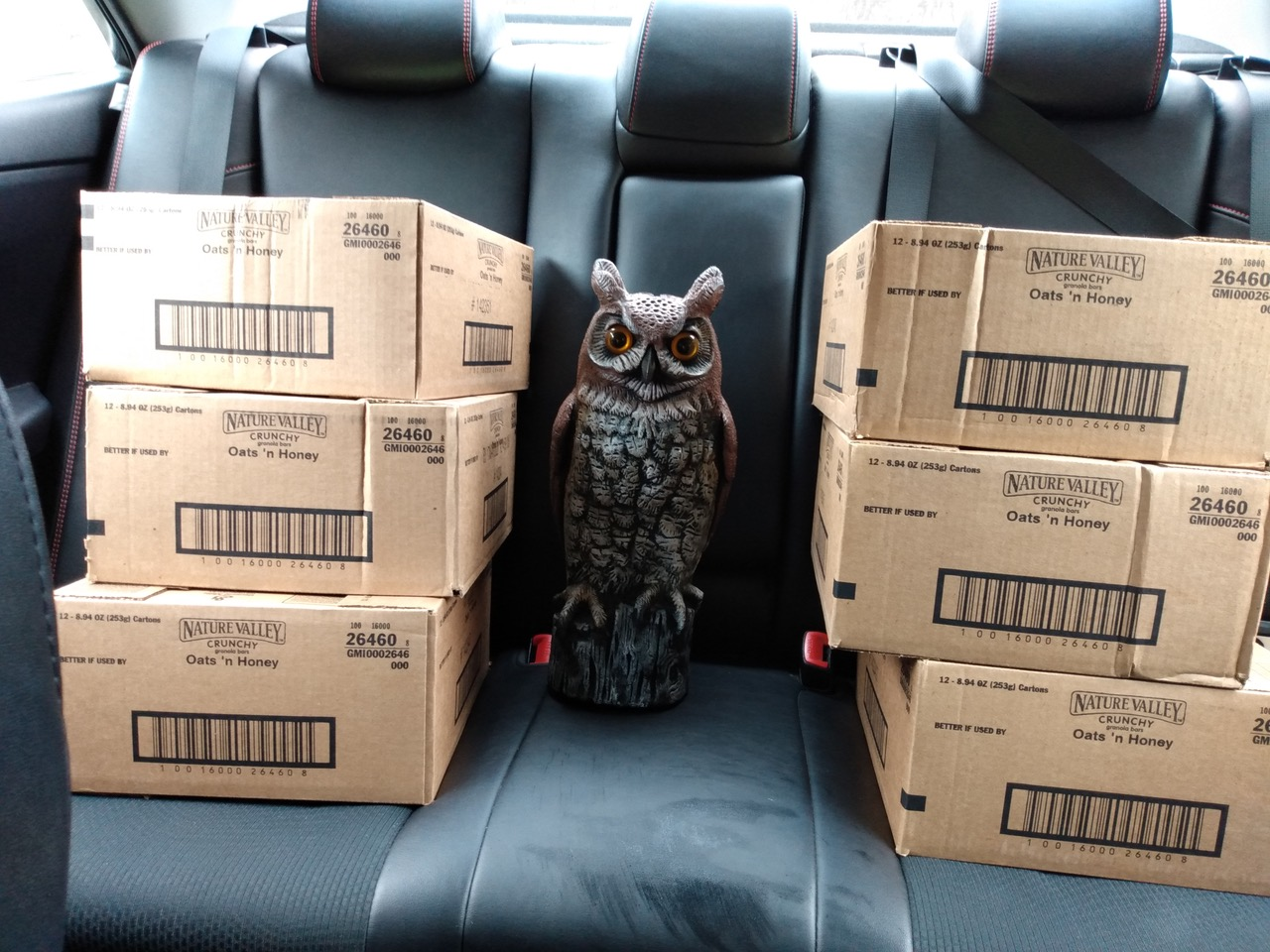 Hooty with 6 cases for Waltham Public Housing (1)