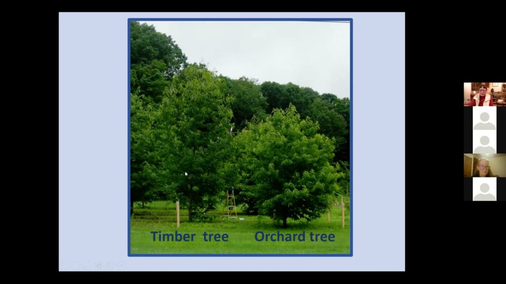 picture of chestnut trees from webinar