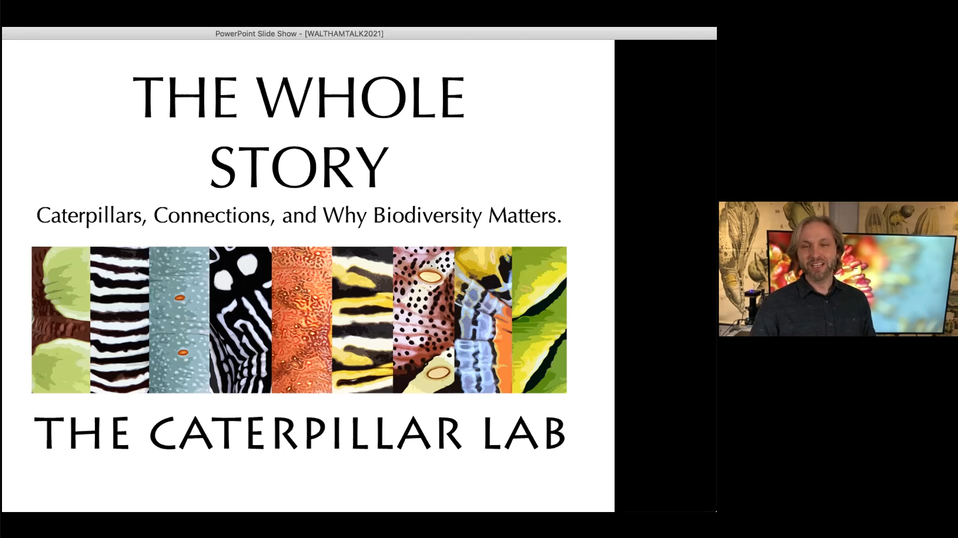 The Caterpillar Lab The Whole Story