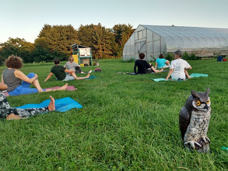 People doing yoga on a lawn with Hootie the owl