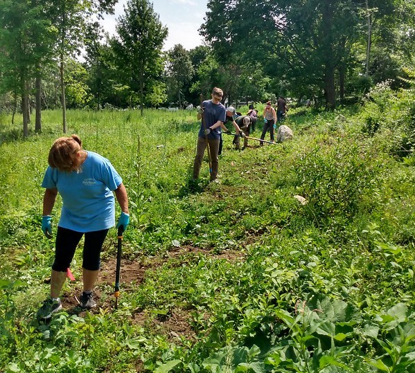 Volunteers clearing a path in a field